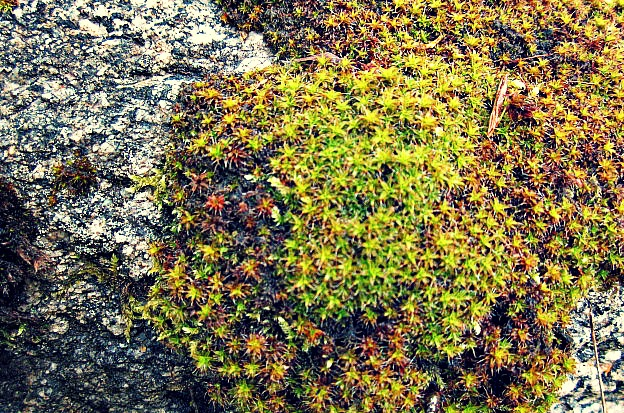 This beautiful moss was growing on a rock.