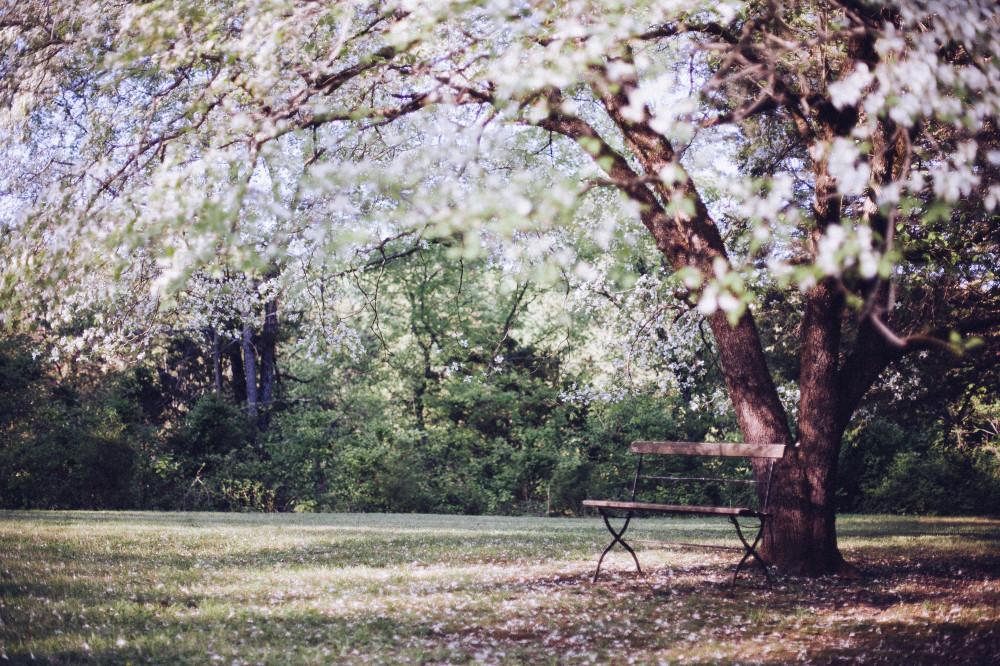 Public Domain Images. dandelionpie.com