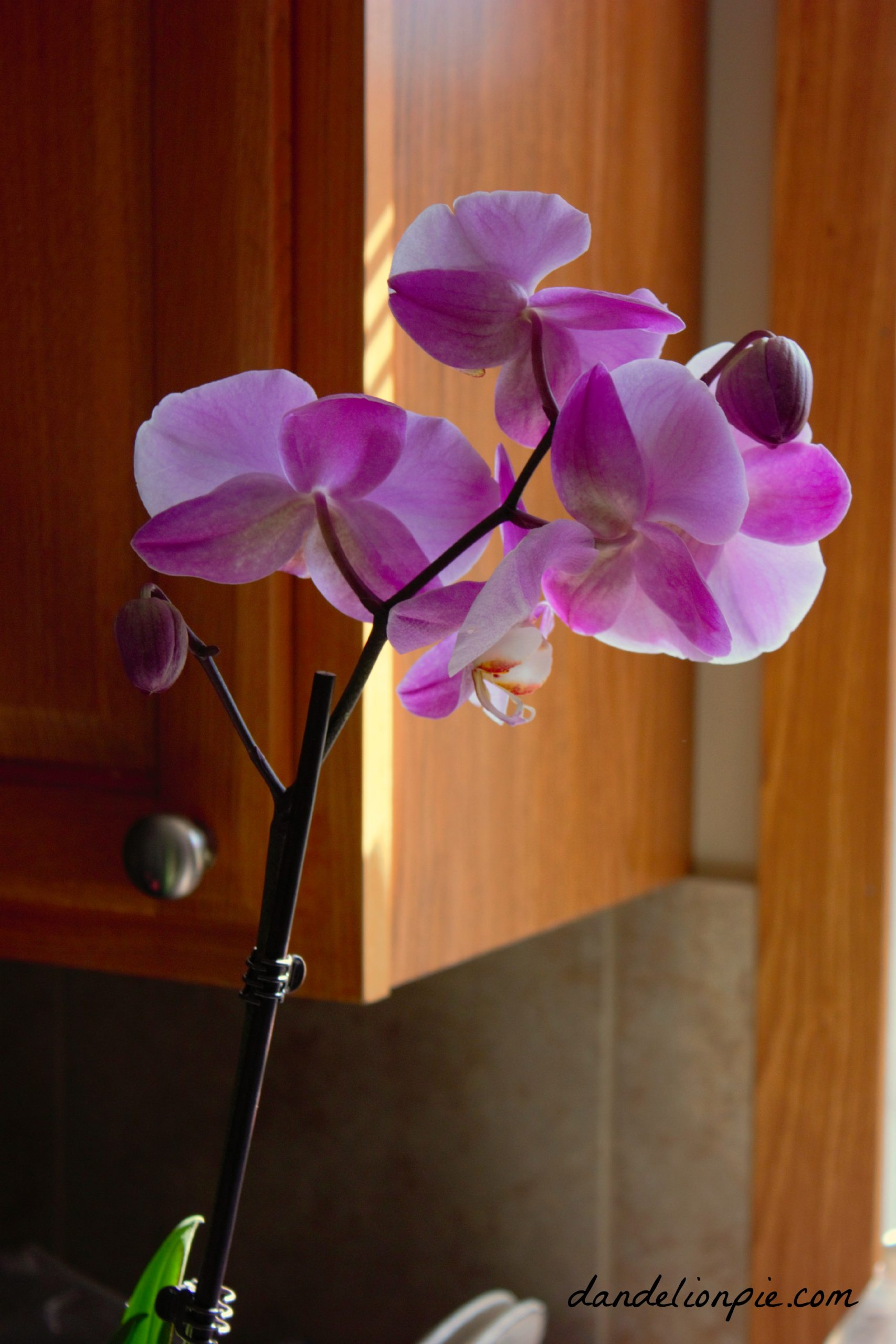 Warrior Man brought me an orchid!