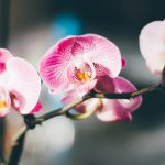 A Beginner's Guide to Caring for an Orchid