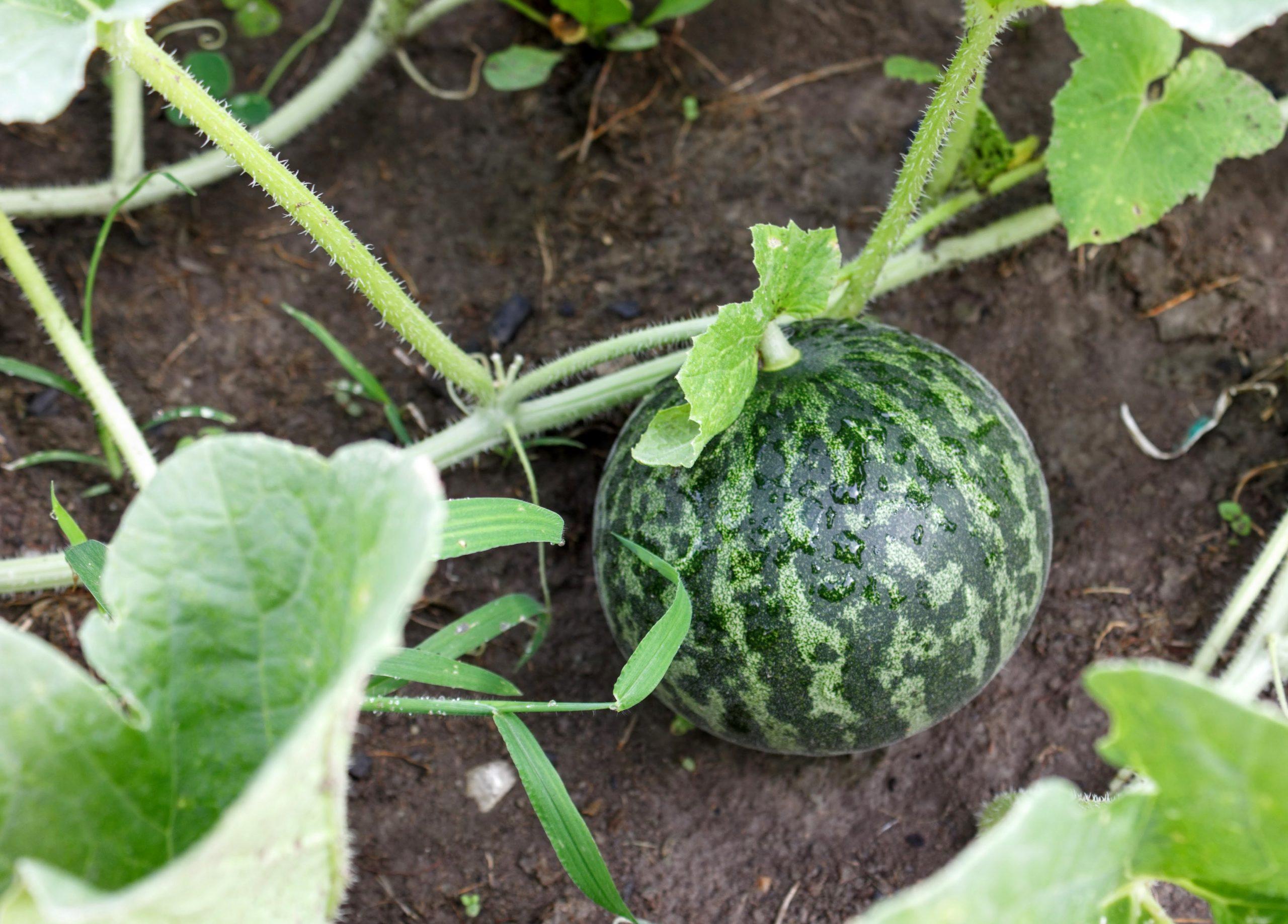 What's Growing in My Garden: in August