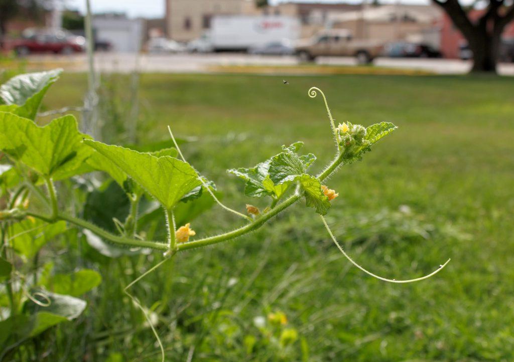 What's Growing in my Garden in August