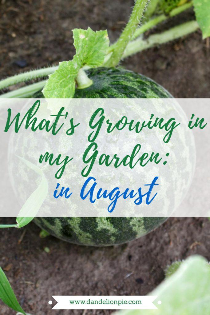 What's Growing in my Garden in August #garden #august #plant #gardening #watermelon