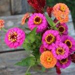 The Stroller Mom's Autumn Bucket List + Free Printable